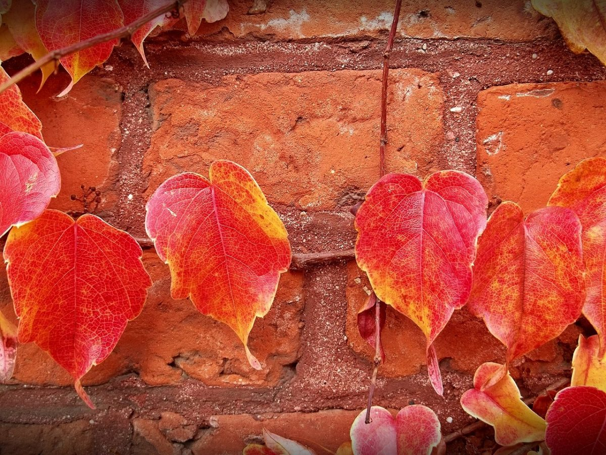 Is Your Home FALLing Apart? Why Fall May Be the Best Season to Renovate.